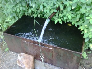Ripton's natural water fountain.