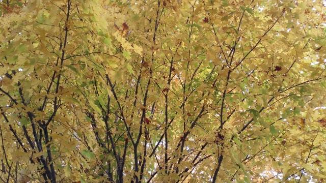 autumnal trees
